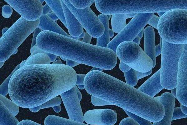 Micróbios serão os únicos seres a viver na Terra